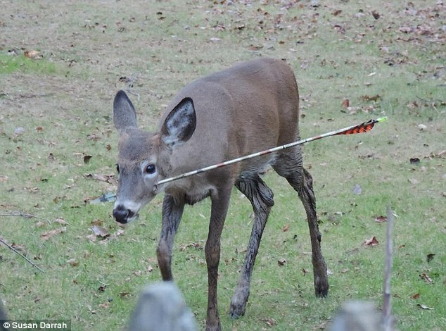whitetail deer shot placement diagram rv 50 amp wiring handicapped outdoors for less tracking courtesy of dailymail com not cool