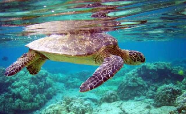 Tanggal 23 Mei Hari Penyu dan Kura-kura Sedunia