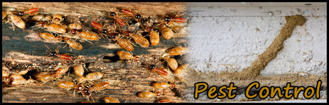 Pest Control Services in Ahmedabad