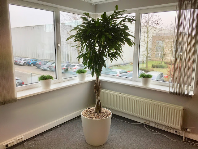 plantenverhuur bedrijven kantoorinrichting en kruidenplantjes in grote witte zwarte grijze plantenbakken op poten voor buiten met klimrek voor op terras op balkon in tuin en rechthoekig of rond of hoog hangend