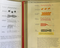 A illustration showing chromatin packing, in Intermediate Physics for Medicine and Biology (left) and Molecular Biology of the Cell (right).