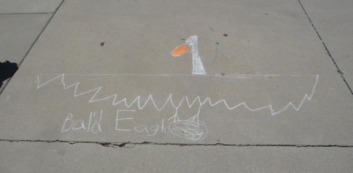 Mrs. Yollis' Classroom Blog: Wonderful Wingspans!