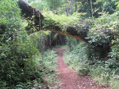 trail in ankarana national park
