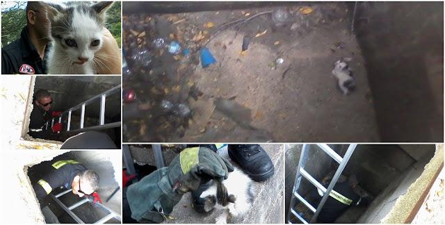 Ηγουμενίτσα: Επιχείρηση της Πυροσβεστικής για τον απεγκλωβισμό γάτας (+ΦΩΤΟ)