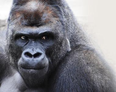 大猩猩深蹲法 | 網路記事本