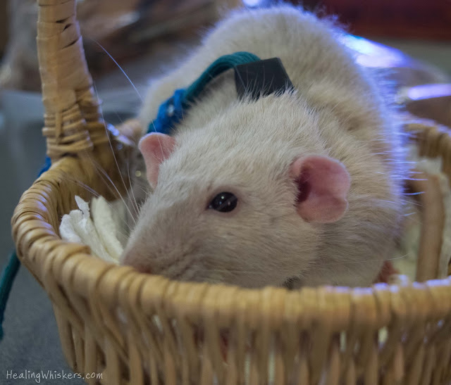 Oliver in a basket