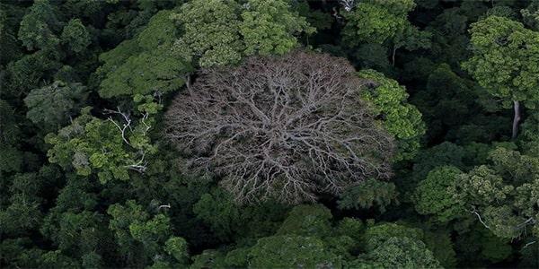 факт про растительность  тропических лесов