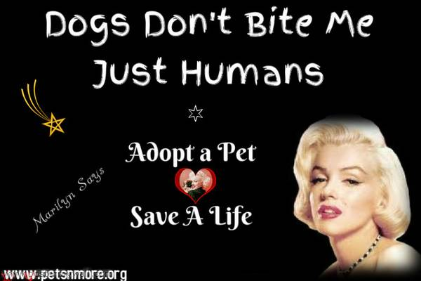 animal, dog, cat, pet, animal, inspiring quotes for animal lovers, petsnmore.org, marilyn monroe,
