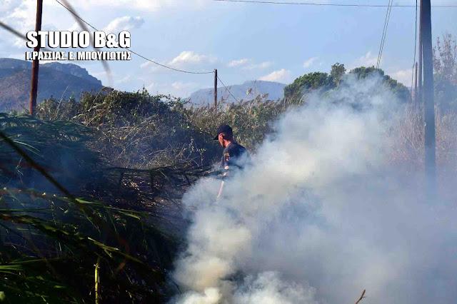 Αργολίδα: Πυρκαγιά στο βάλτο Νέας Κίου (βίντεο)