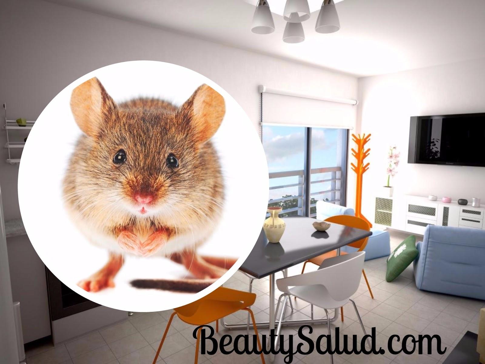 Ratones En Casa. Stunning Divertida Mascota Gatito Gato Jugando Ratn ...