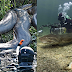 WATCH: A Diver's Face to Face Encounter with A Giant Anaconda will Amaze You!!!