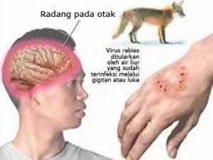 Gigitan Anjing Bisa Sampai Ke Meningitis