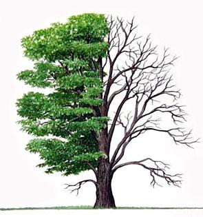 Mempelajari Makna 10 Ranting Pohon Ramadhan 2016