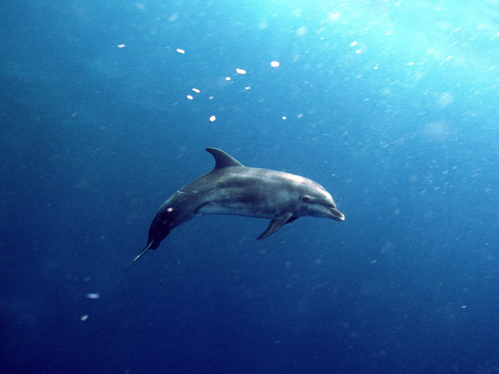 https://2.bp.blogspot.com/-PSZ-B_KePUo/Tg29EsIyuPI/AAAAAAAAA9o/qiAmLcToDVg/s1600/Underwater%2BWallpaper%2B%25252836%252529.jpg