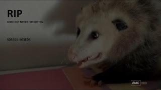 RIP opossum