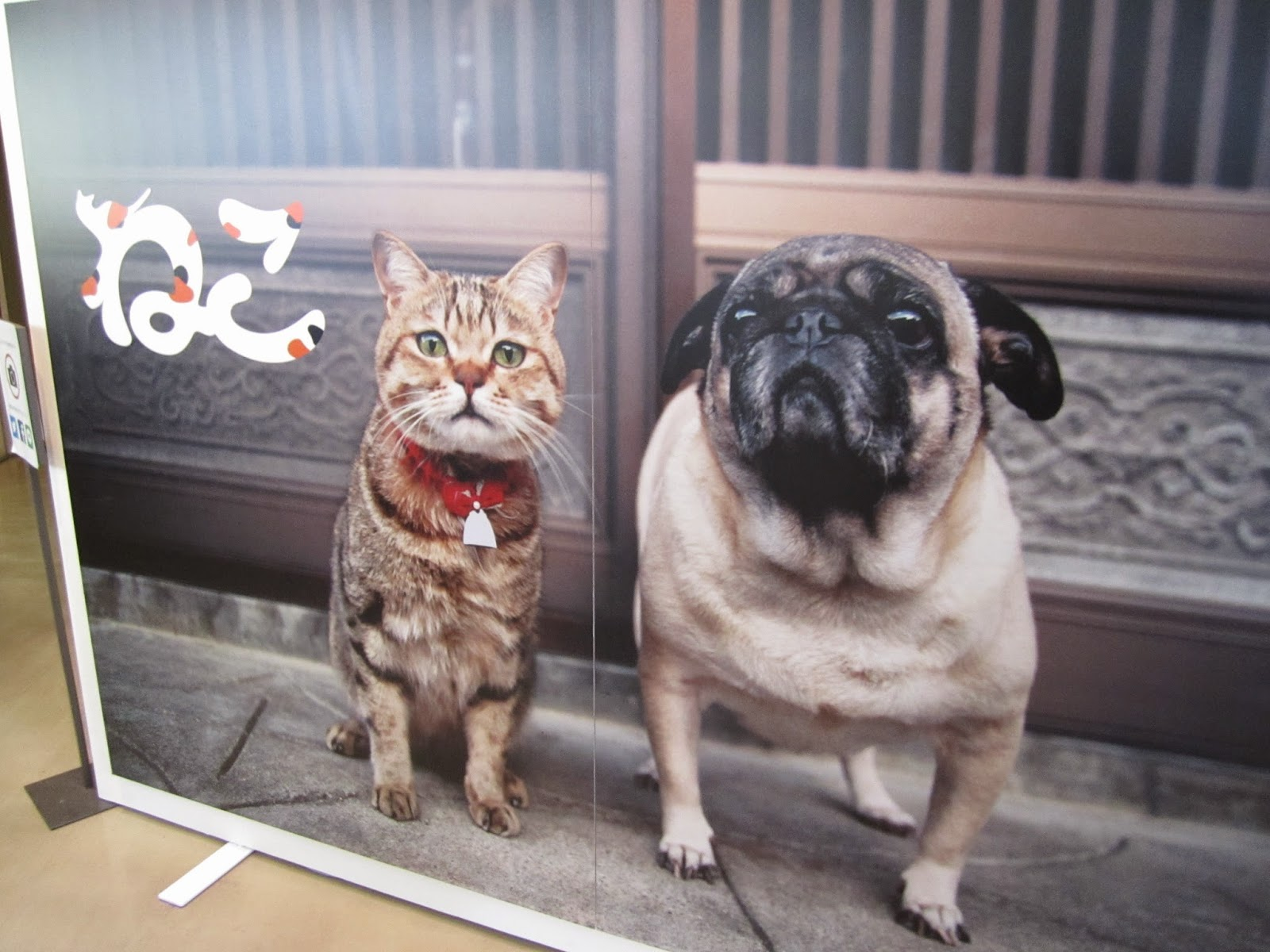Hachinohe City Museum of Art Neko Iwago Mitsuaki Photography Exhibit 八戸美術館 岩合光明写真展「ねこ」