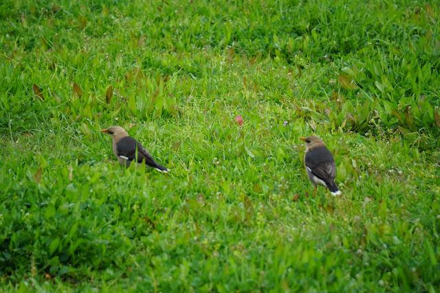 ציפורים גבעת נפוליאון