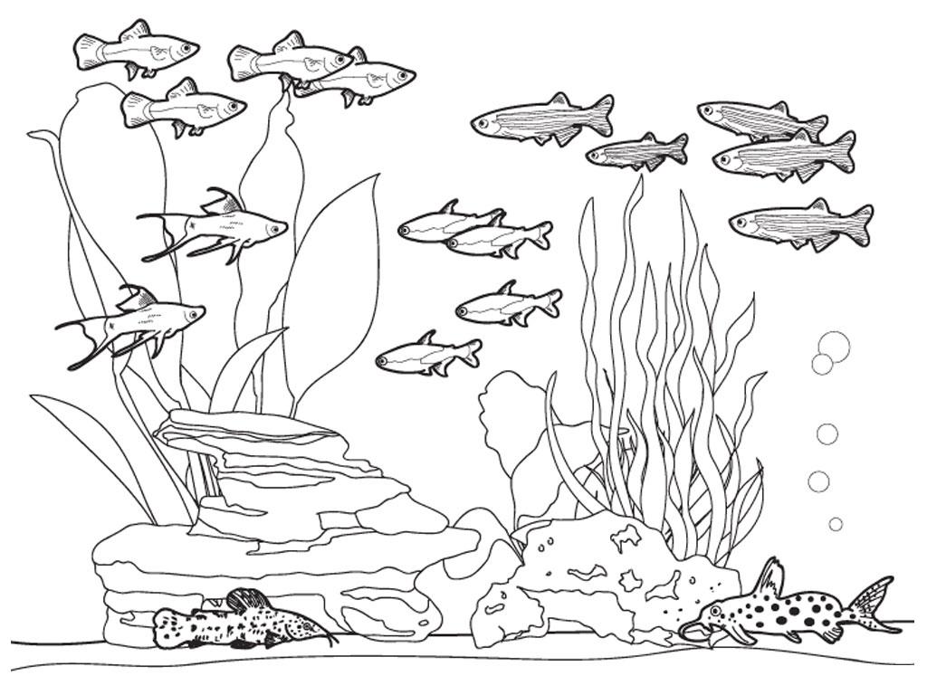 Gambar Mewarnai Pemandangan Bawah Laut Anak TK PAUD SD