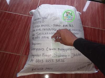 Benih pesanan SUYONO Semarang, Jateng  (Sesudah Packing)