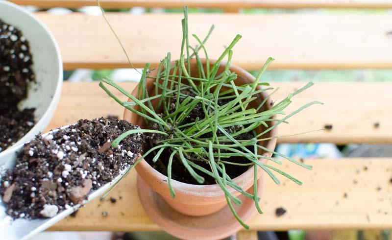 Houseplants, Garden Projects, Indoor plants, Winter gardening