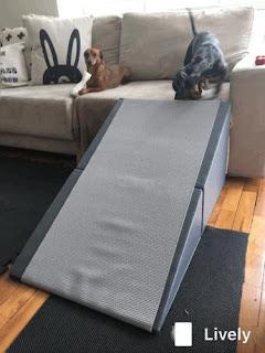 rampas para sofás cães
