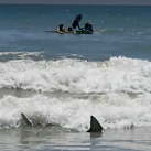 VIDEO: 6-foot Shark Swims Between Children And Shore Off Cocoa Beach