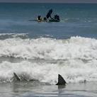 VIDEO: 6-foot Shark Swims Between Children And Shore Off Cocoa Beach