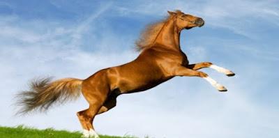 atlarin-genel-özellikleri