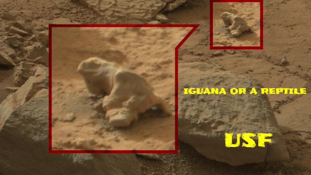 Some sort of a reptile or an Iguana caught on camera on Mars.