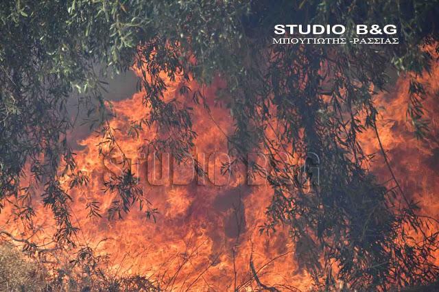 Πυρκαγιά στην επαρχιακή οδό Άργους - Ναυπλίου στην Αργολίδα