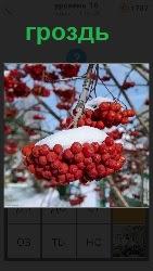 460 слов 4 гроздь рябины под снегом на дереве 16 уровень