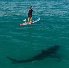 Paddle Board on the Shark Tank Show