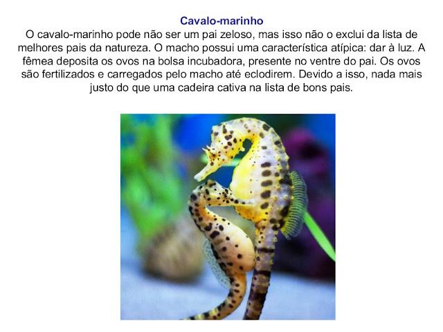 OS PAIS DO REINO ANIMAL