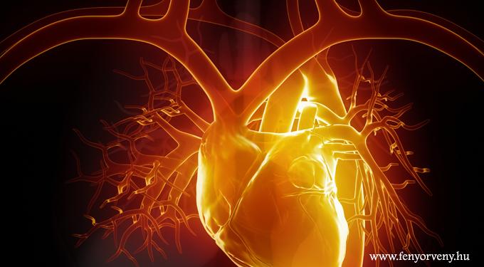 Kiderült, hogy a szív a legintelligensebb szerv