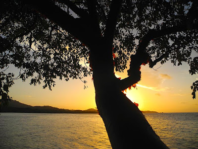 good energy, good energy tree, magic of paya, sunsets, paya bay resort,