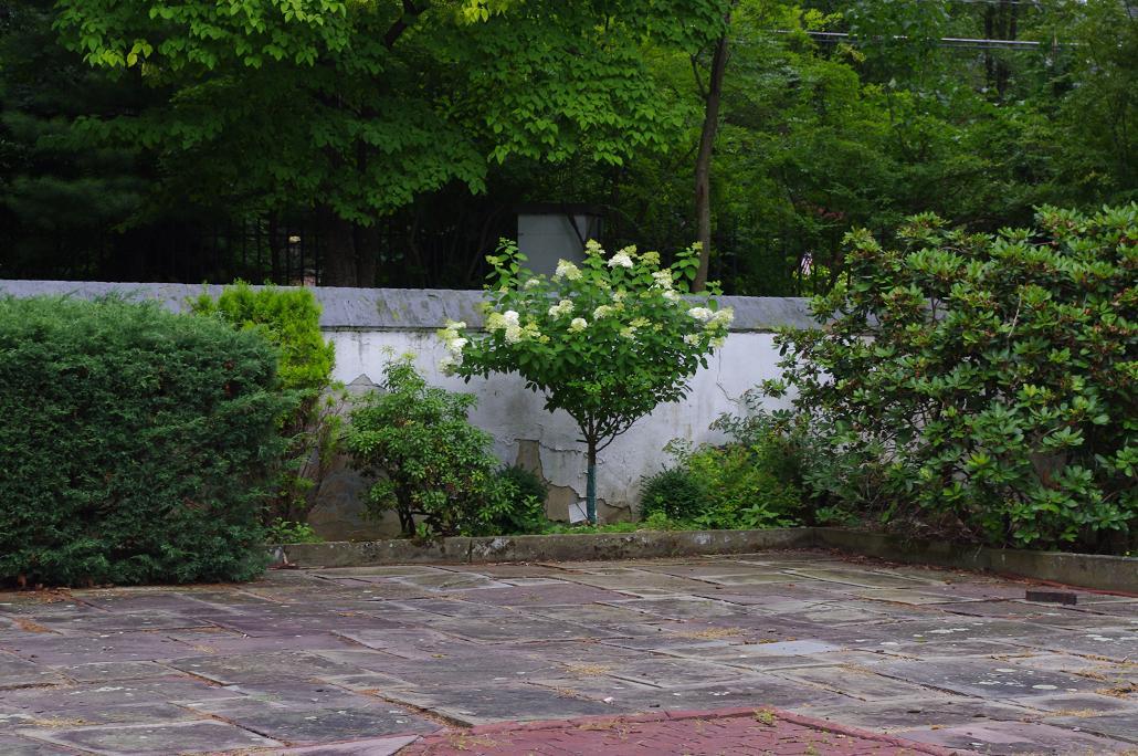 Modern Day Ozzie and Harriet: Garden Tuesday: Hydrangea