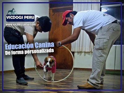 Entrenador de Perros en San Miguel