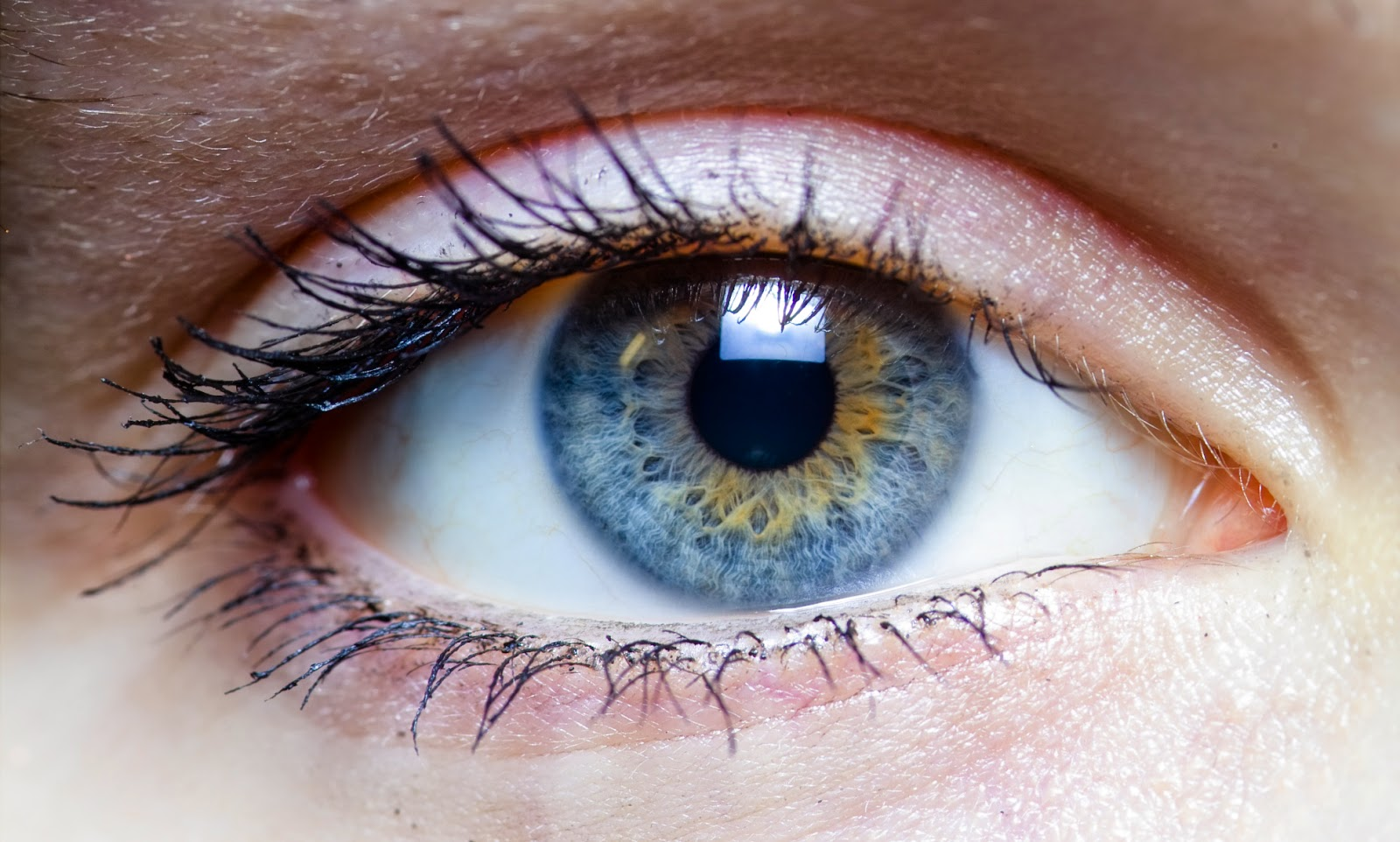 a2a8bf2f9 زرع القرنية (Corneal Transplantation) ~ مركز العيون الصناعية