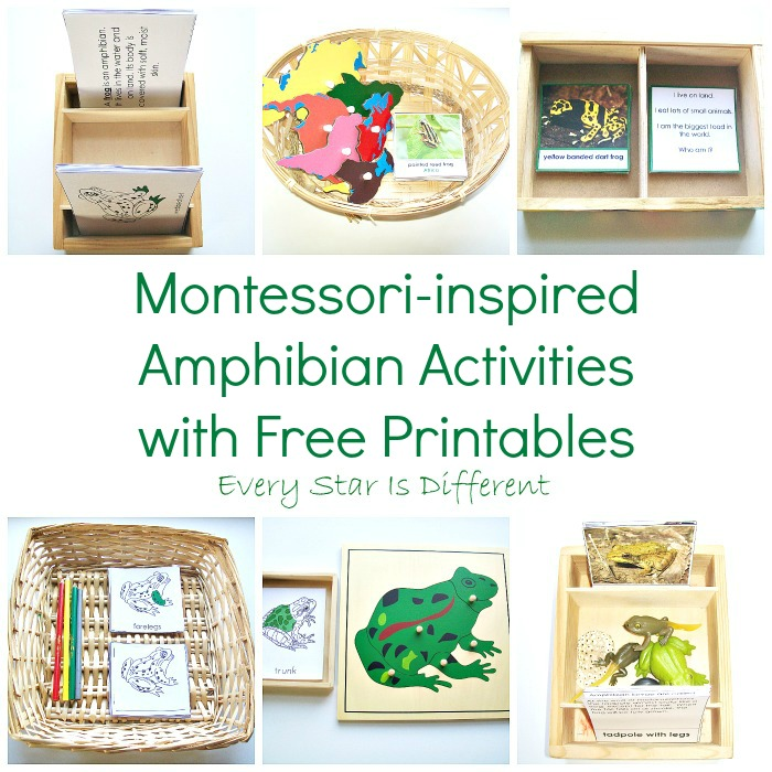 Montessori-inspired Amphibian Unit