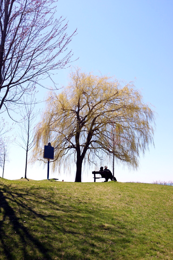 Weeping Willow Tree - Scarborough Bluffs, Toronto - Tori's Pretty Things Blog