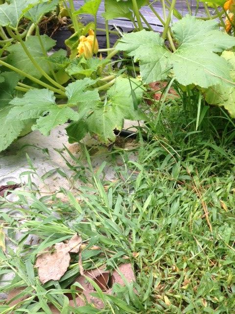 Controlling Weeds In The Vegetable Garden