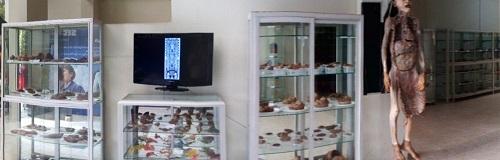 Museo Anatómico de la Fac. de Medicina Hipólito Unánue de la UNFV