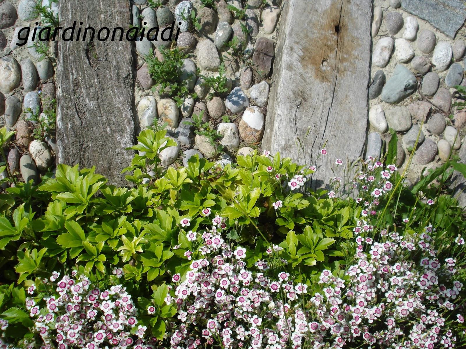 Il giardino delle naiadi progettare bordure e aiuole for Cespugli perenni