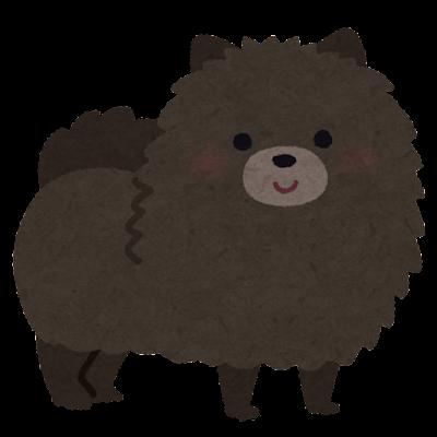 黒いポメラニアンのイラスト(犬)