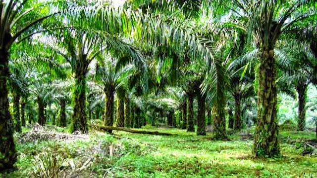 Sumber daya alam dari usaha perkebunan