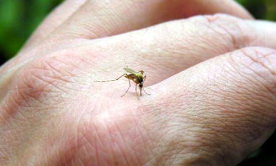 chikungunya-ja-matou-1-pessoa-em-aracati-2-em-Beberibe-e-1-em-Morada-Nova