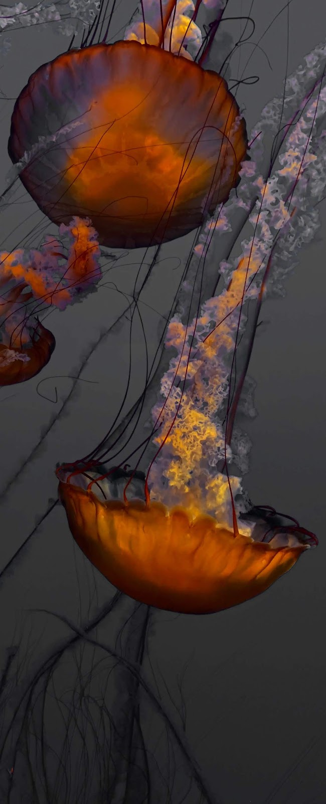 Amazing photo of jellyfish.