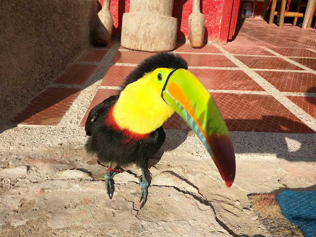 Toucan, le nouveau compagnon