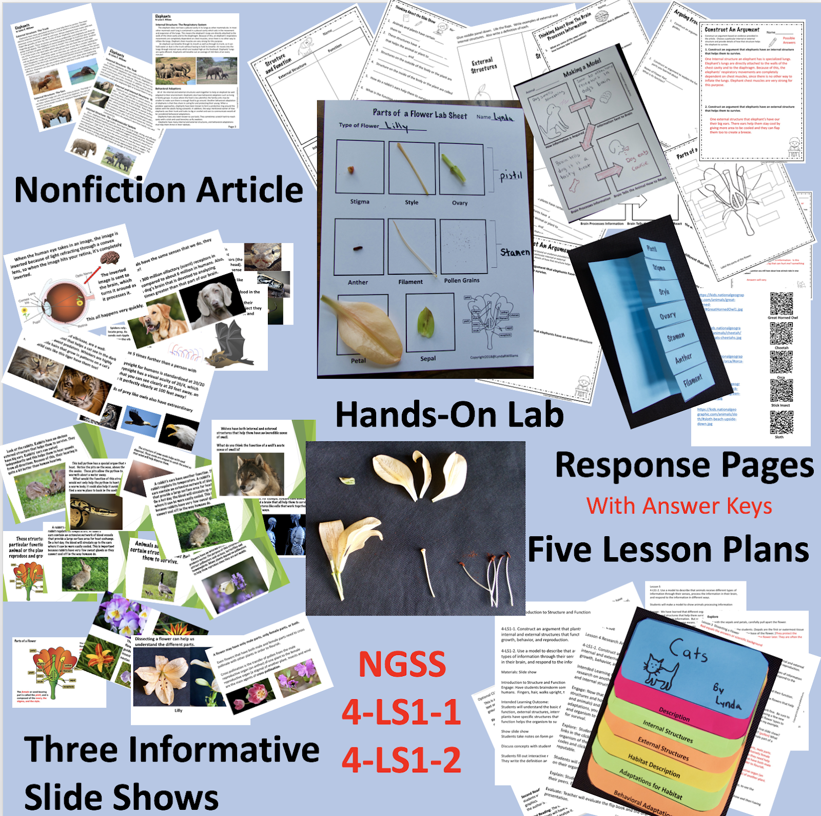 Teaching Science With Lynda: Dissecting a Flower to Teach Structure and  Function NGSS4-LS1\u003d1 and NGSS 4-LS1-2 [ 1592 x 1600 Pixel ]
