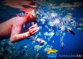 snorkeling menikmati bawah laut karimunjawa